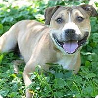 Adopt A Pet :: Draco - Chicago, IL