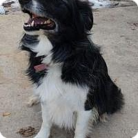 Adopt A Pet :: Lady - Logan, UT