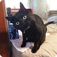 Adopt A Pet :: Niner and Raider - Mission Viejo, CA