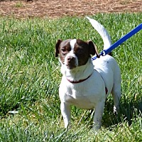 Adopt A Pet :: newby - Rock Hill, SC