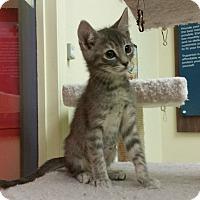 Adopt A Pet :: Sundae - Phoenix, AZ