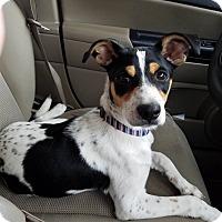 Adopt A Pet :: Jack pending adoption - Manchester, CT