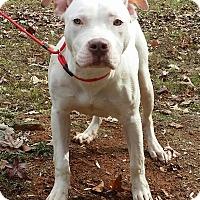 Adopt A Pet :: Riley - Lawrenceville, GA