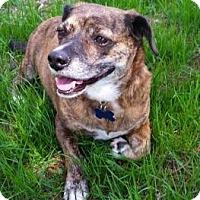 Adopt A Pet :: COOKIE - Brunswick, ME