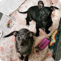 Adopt A Pet :: Ramona and Gia - Stockton, CA