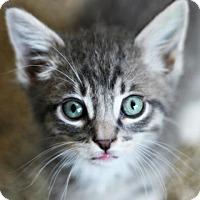 Adopt A Pet :: Quintus 4 - Austin, TX