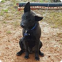Adopt A Pet :: Ethan - Minneapolis, MN