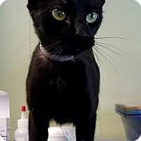 Adopt A Pet :: Ninja - Indianola, IA