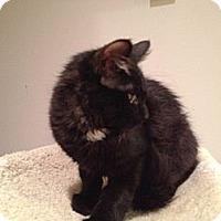 Adopt A Pet :: Hershey - East Hanover, NJ