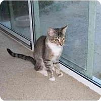 Adopt A Pet :: Jackie - Davis, CA