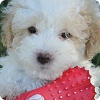 Adopt A Pet :: Bingo - La Costa, CA
