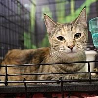 Adopt A Pet :: Banzai - Chino, CA