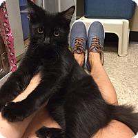 Adopt A Pet :: Phil - Colmar, PA