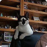 Adopt A Pet :: Rollins 160804 - Atlanta, GA