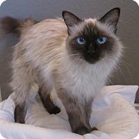 Adopt A Pet :: Digger - Gilbert, AZ