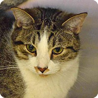 Adopt A Pet :: Baron - Sierra Vista, AZ