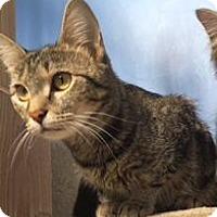 Adopt A Pet :: Nita - Harrisonburg, VA