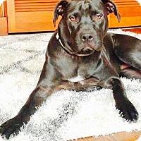 Adopt A Pet :: Zarah - Dayton, OH