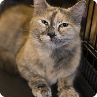 Adopt A Pet :: A..  Blondie - Mooresville, NC