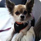 Adopt A Pet :: Sunny