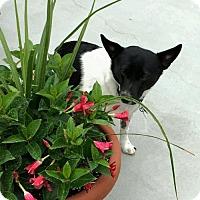 Adopt A Pet :: Nalah - Alpharetta, GA