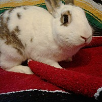 Adopt A Pet :: Fauna - Watauga, TX