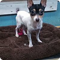 Adopt A Pet :: Cricket - Crump, TN