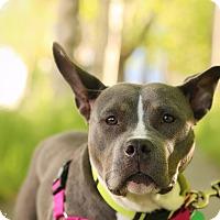 Adopt A Pet :: Miss Piggy - Portland, OR