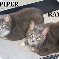 Adopt A Pet :: Rayne - Elizabeth City, NC