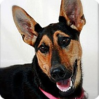 Adopt A Pet :: Twiggy - Hastings, NY