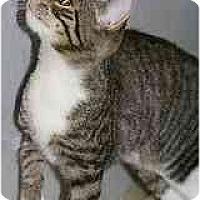 Adopt A Pet :: Eden - Marietta, GA