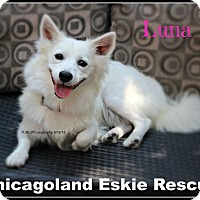 Adopt A Pet :: Luna - Elmhurst, IL