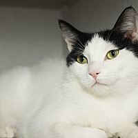 Adopt A Pet :: Morgana - Los Angeles, CA