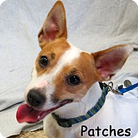 Adopt A Pet :: Patches the Dog - Warren, PA