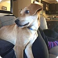 Adopt A Pet :: Jack - waterbury, CT