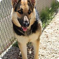 Adopt A Pet :: Heidi - Waco, TX
