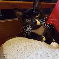 Adopt A Pet :: Patches - Old Bridge, NJ