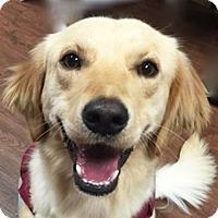 Adopt A Pet :: Caddy - BIRMINGHAM, AL