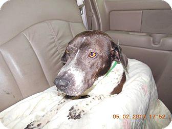 Shar Pei/Basset Hound Mix Dog for adoption in Mira Loma, California - Penn in Texas