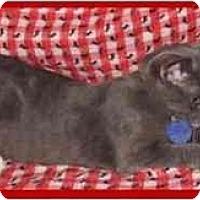 Adopt A Pet :: Graham - Orlando, FL