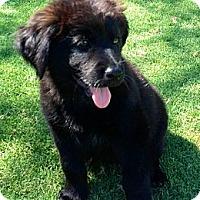 Adopt A Pet :: Big Mac - Scottsdale, AZ