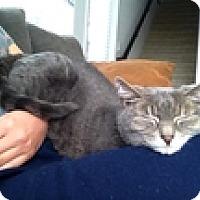 Adopt A Pet :: Minerva - Vancouver, BC