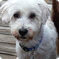 Adopt A Pet :: Troy - Kingwood, TX