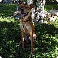 Adopt A Pet :: Roger - Hamilton, ON