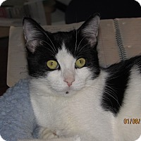 Adopt A Pet :: Cleo - Southington, CT