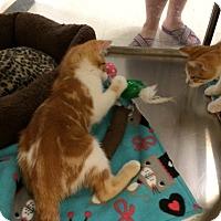 Adopt A Pet :: Jay - Byron Center, MI