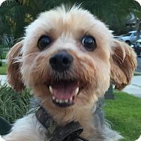 Adopt A Pet :: Grandpa Looey - Orlando, FL