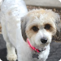 Adopt A Pet :: Addison - Norwalk, CT