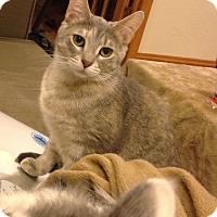 Adopt A Pet :: Dizzy - Chicago, IL