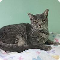Adopt A Pet :: Mercury - Lunenburg, MA